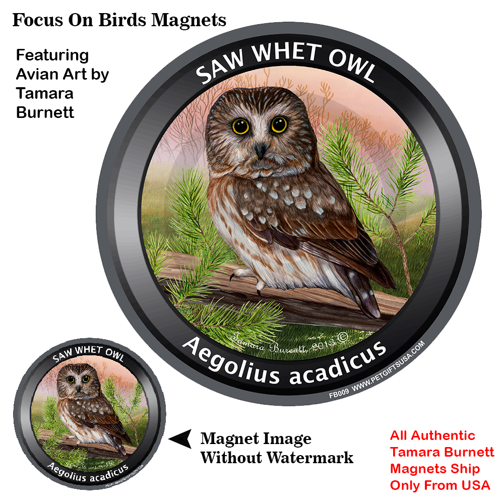 Saw Whet Owl - Spring Scene Focus On Birds Magnet Image